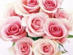 Buchet All Pink